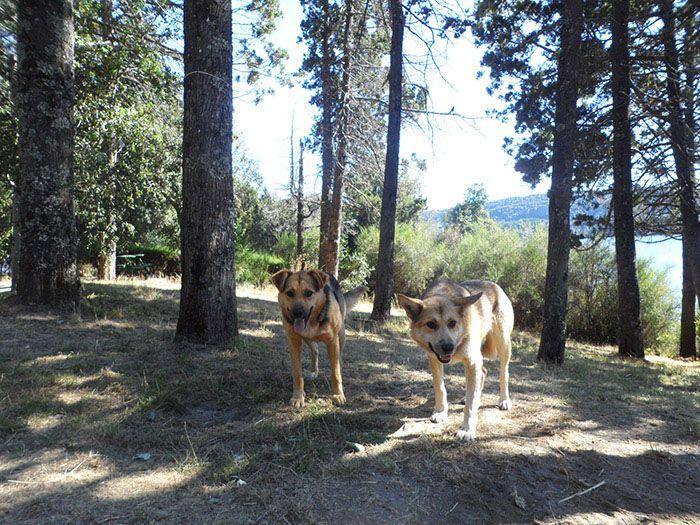 Había muchos perros en el camping, ¡cuál de ellos más cariñoso!