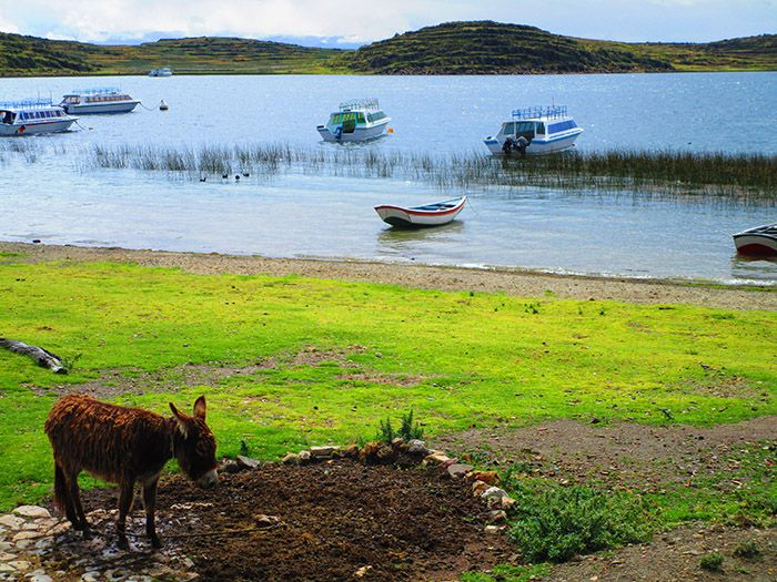 Comunidad de Challapampa, al norte de la Isla del Sol