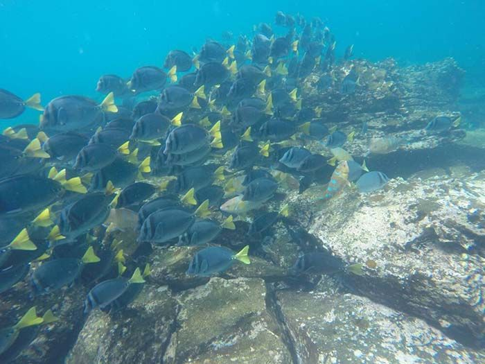 Galapagos (25)