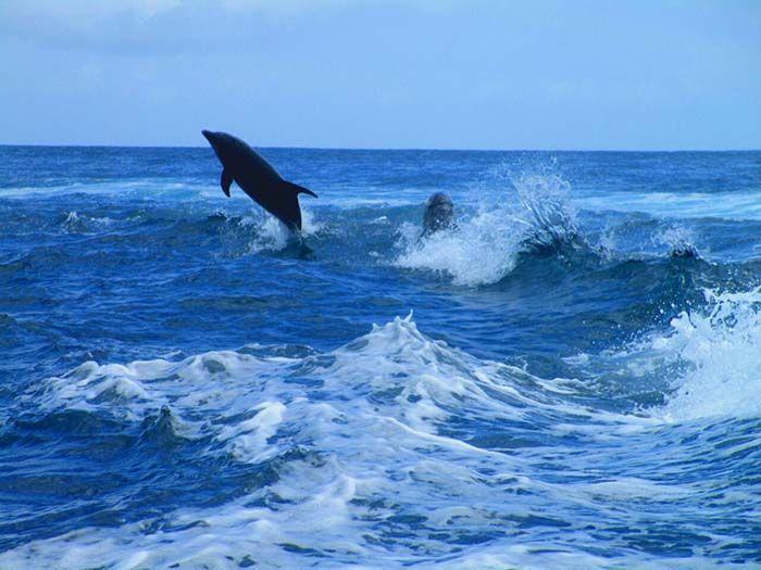 Tu experiencia dependerá del barco en el que vayas, del clima, y de la suerte. ¡Nosotros la tuvimos al ver estos delfines saltarines!