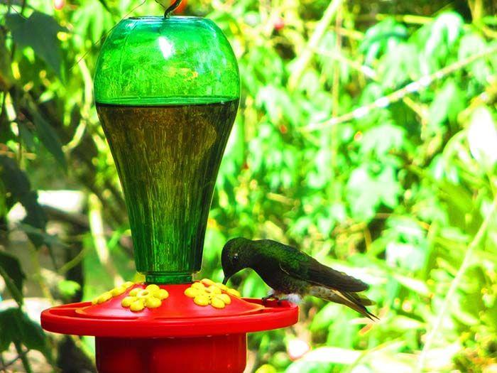 Hay muchos colibríes en la Reserva de Acaime. Mueven las alas... ¡