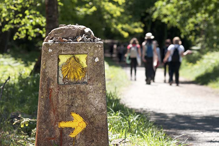 Camino de Santiago Organizado conocer gente