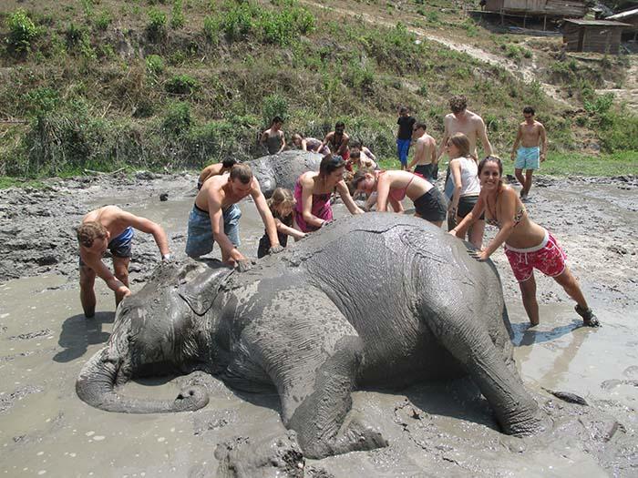 Bañar elefantes en Tailandia