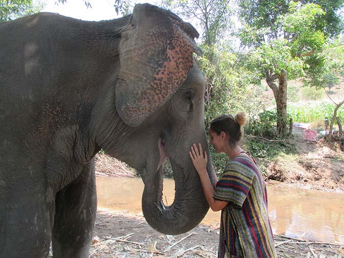 Centro de rescate de elefantes chiang mai
