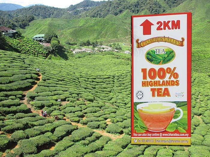 Visitar las plantaciones de té Cameron Valley en Cameron Highlands