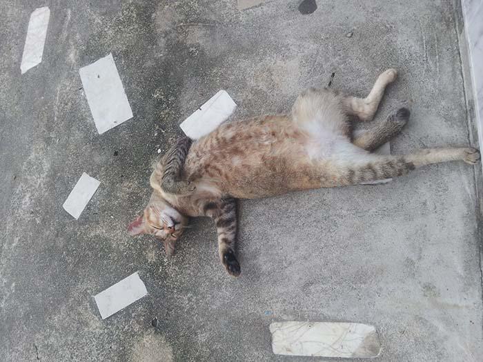 Gatos en Langkawi por Viviendoporelmundo