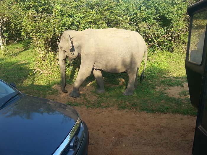 Animales que puedes ver en el Parque Nacional Yala
