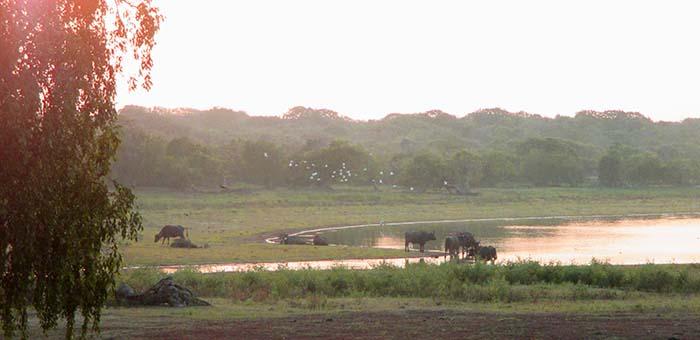 Nuestro safari en el Parque Nacional Yala