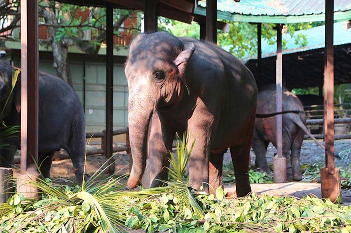 ¿Qué hacer en Kandy? - Orfanato de elefantes Pinnawala