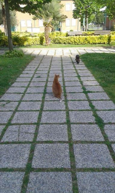pet carpet