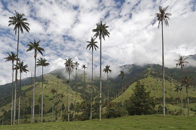 Hay muchas alternativas de becas para colombianos en el exterior
