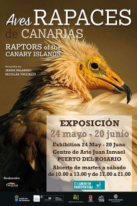 Aves rapaces de Canarias @ Centro de Arte Juan Ismael | Puerto del Rosario | Canary Islands | Spain