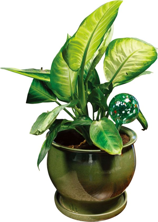 2 Watering Plant Bulbs Glass Water Globes Indoor Outdoor Automatic Holiday