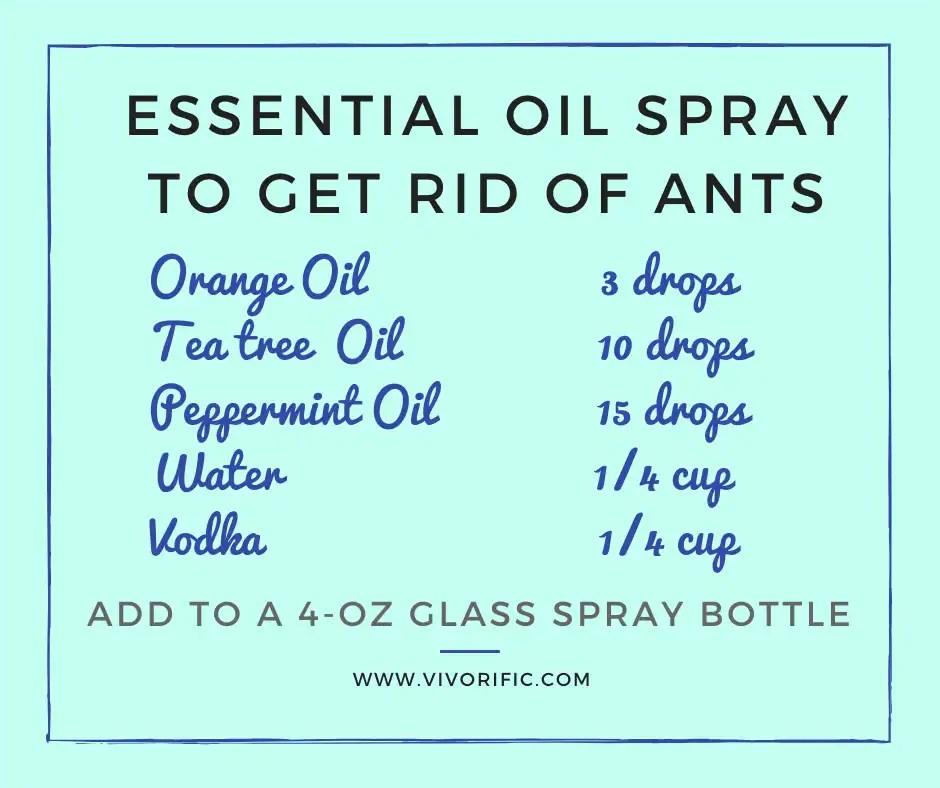 Essential Oil Spray to Get Rid of Ants - Vivorific Health