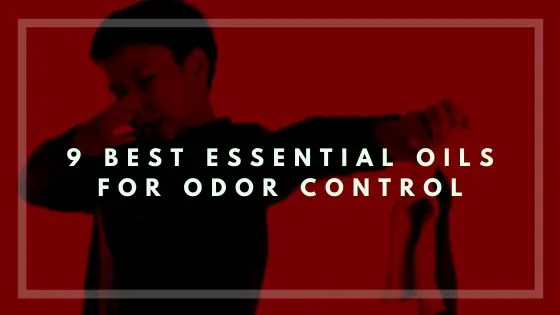 9 Best Essential Oils for Odor Control-Vivorific Health