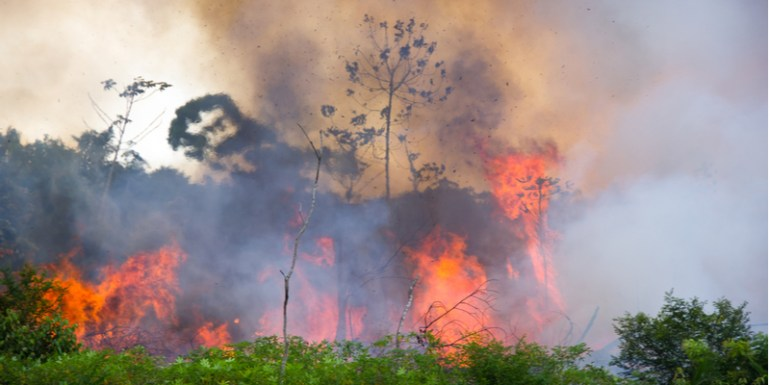 Monetizing The Flames Hidden News Behind The Fire Of The Amazon