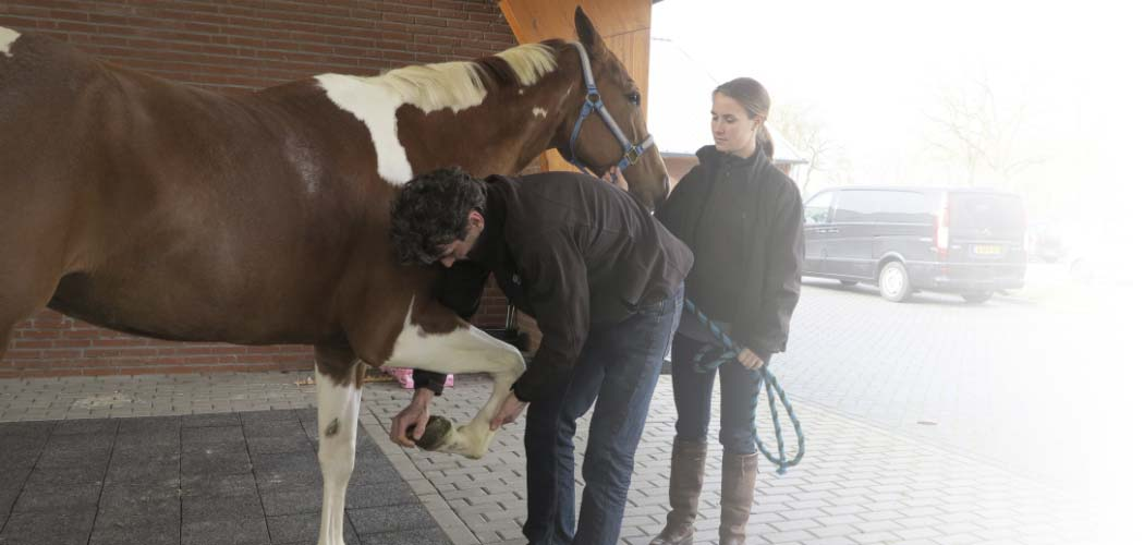 Training gezondheidsonderzoek bij paarden
