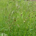 prachtig inheems gras