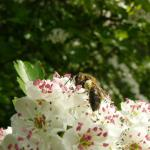 eco hovenier- en ontwerpbedrijf: Vlinder er Bij Natuurtuinen
