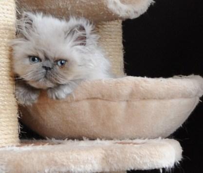 kittens Shanty x Pedro (11)