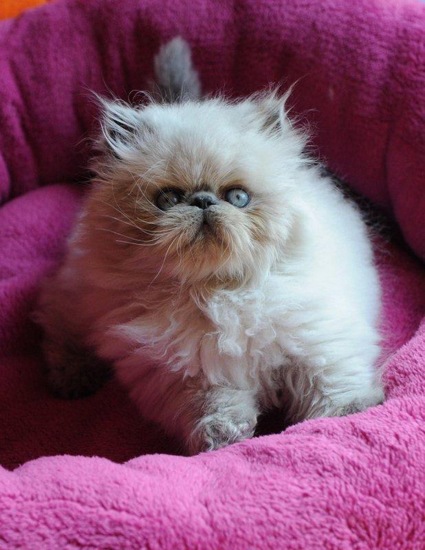 kittens Shanty