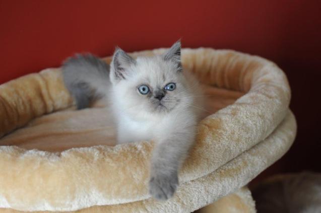 kittens Yoramys Idoya & La Vanitas Pedro 04