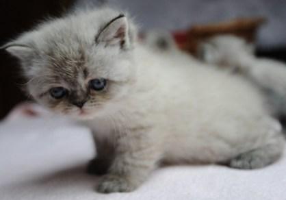 kittens dushinka x pedro (17)