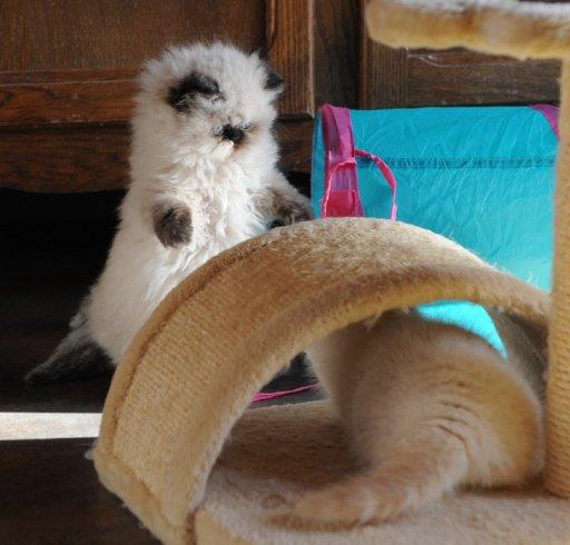kittens morticia