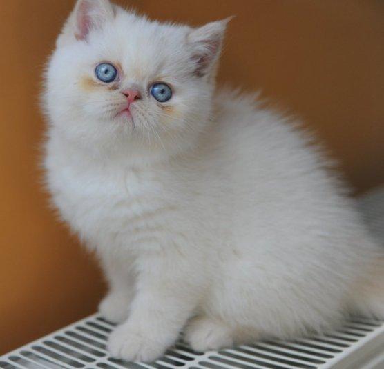 kittens morticia1