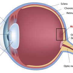 Human Eye Diagram Blind Spot Schneider Single Phase Contactor Wiring Macule Pictures Photos