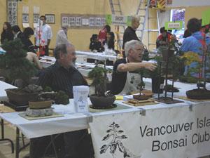 , Bonsai (盆栽) – Miniature Trees, VNCS
