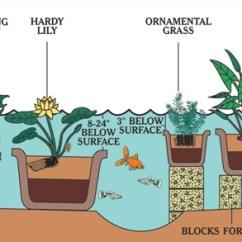 Lotus In Water Plant Diagram 1966 Ford Mustang Dash Wiring Van Ness Garden Planting Supplies