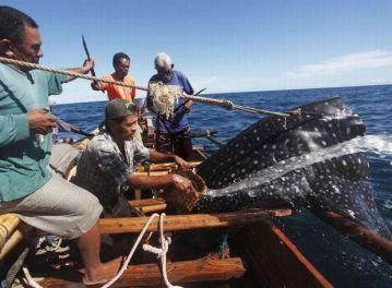 Nelayan Pemburu Ikan Paus Itu Berasal dari Masyarakat ...