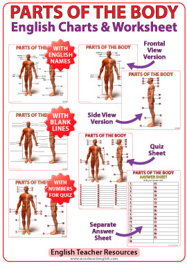 Parts Of The Body Photos And English Vocabulary Vocabulario Partes Del Cuerpo Ingles