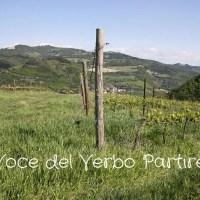 Cosa vedere nei dintorni di Cesena: itinerario tra borghi, rocche, eventi