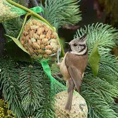 Haubenmeise (Lophophanes cristatus, früher Parus cristatus) mit Erdnussfutter im Vogelhaus