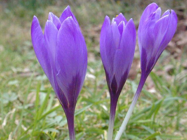 Blumen im Jahresverlauf