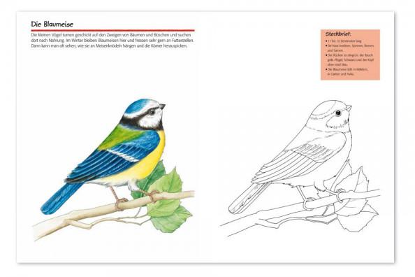 Vogelwartech - 'Vögel' - Malspass