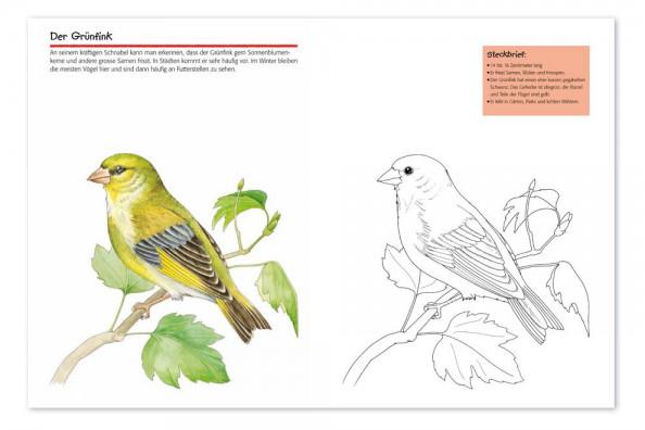 Vogel Malvorlagen Instagram - Zeichnen und Färben