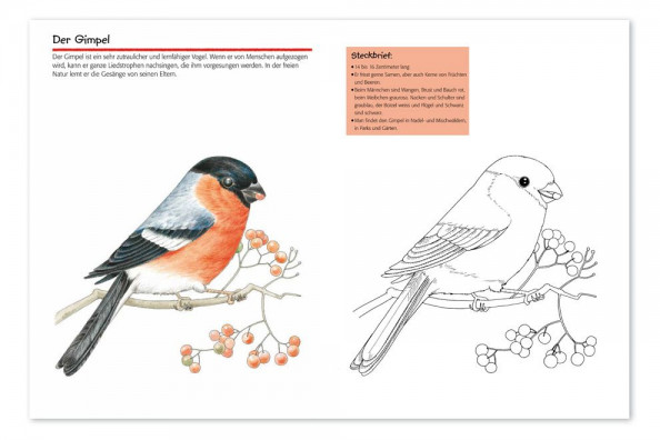 Malvorlagen Singvögel