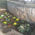 piantumazione fiori nella aiuola di piazzale Sandro Pertini