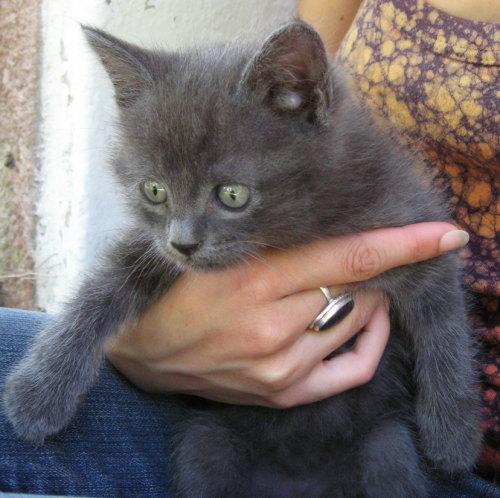 VogliadiTerra  Blog Archive  I gattini