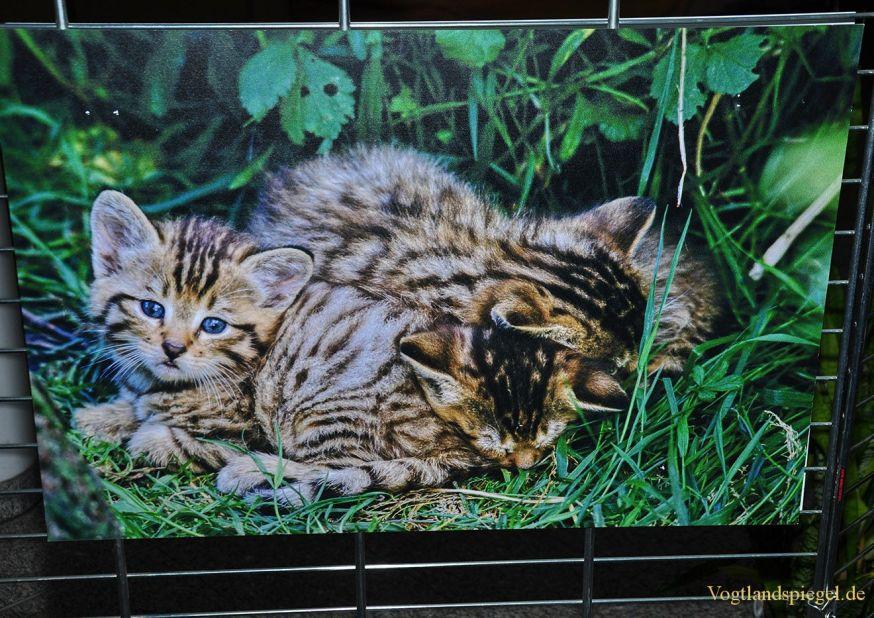 Fotoausstellung WildkatzenSPRUNG im Greizer Landratsamt eröffnet