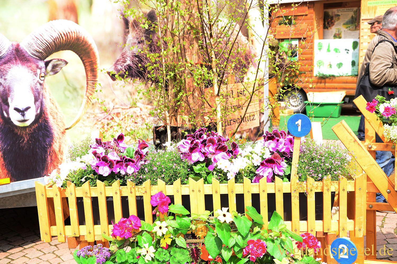 Blütenvielfalt rund um den Maibaum