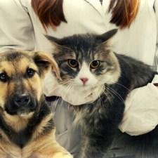 Amo gli animali: lo spot sulla legge che permette di far entrare gli amici a 4 zampe in visita in ospedale ai loro padroni