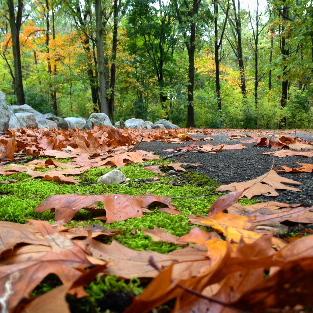 Ah leaves... how I must rake thee. #fallleaves #voiceministriescamp #voiceministries #myindiana