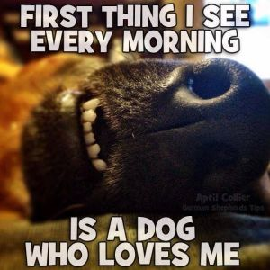 close up of a dog's nose and mouth and the caption: First Thing I See Every Morning is a Dog Who Loves Me