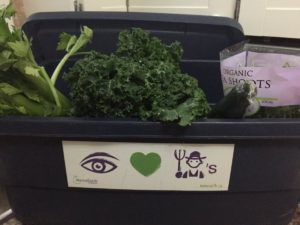 blue plastic bin with vegetables peeking out including kale, celery, a cucumber, pea shoots and zucchini