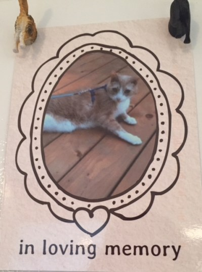 a glossy card that reads In Loving Memory and features a photo of Spice looking into the camera