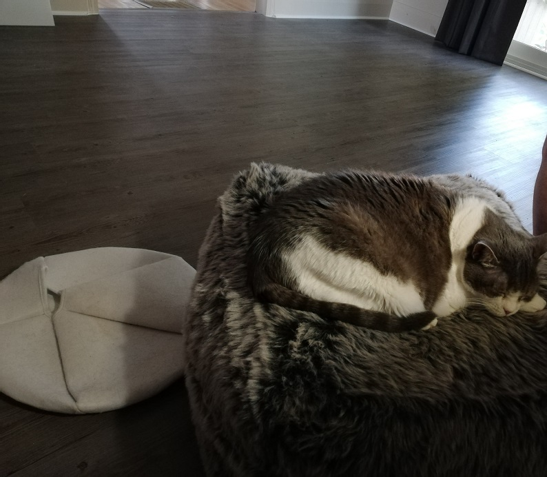 Miss Sugar, fast asleep on her fuzzy, grey ottoman with her felt bed on the floor beside her. A large swath of bare, grey laminate floor can be seen.